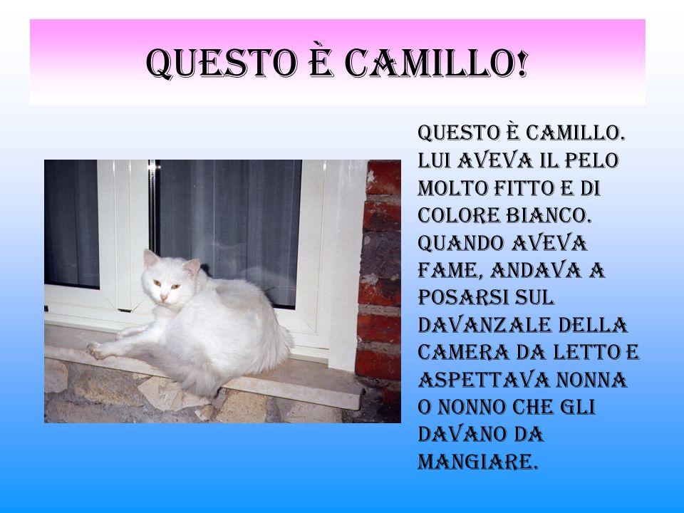 Questo è Camillo.Questo è Camillo. Lui aveva il pelo molto fitto e di colore bianco.