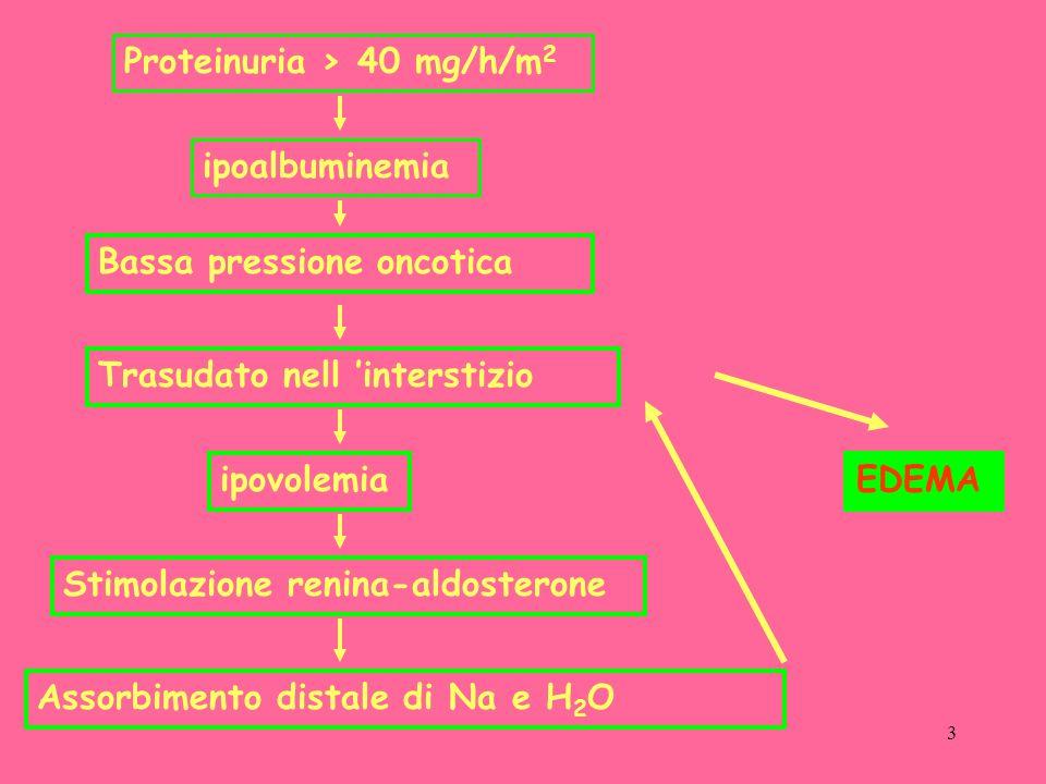 34 Tumor necrosis factor alfa production from mononuclear cells in nephrotic syndrome Ped Nephrology April 2003 54b ITF (ELISA) in monociti sierici Predittivo per la risposta allo steroide Al cut off di 50pg/ml valore predittivo negativo 93,2%