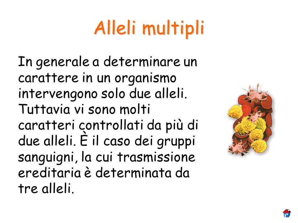 Alleli multipli In generale a determinare un carattere in un organismo intervengono solo due alleli. Tuttavia vi sono molti caratteri controllati da p