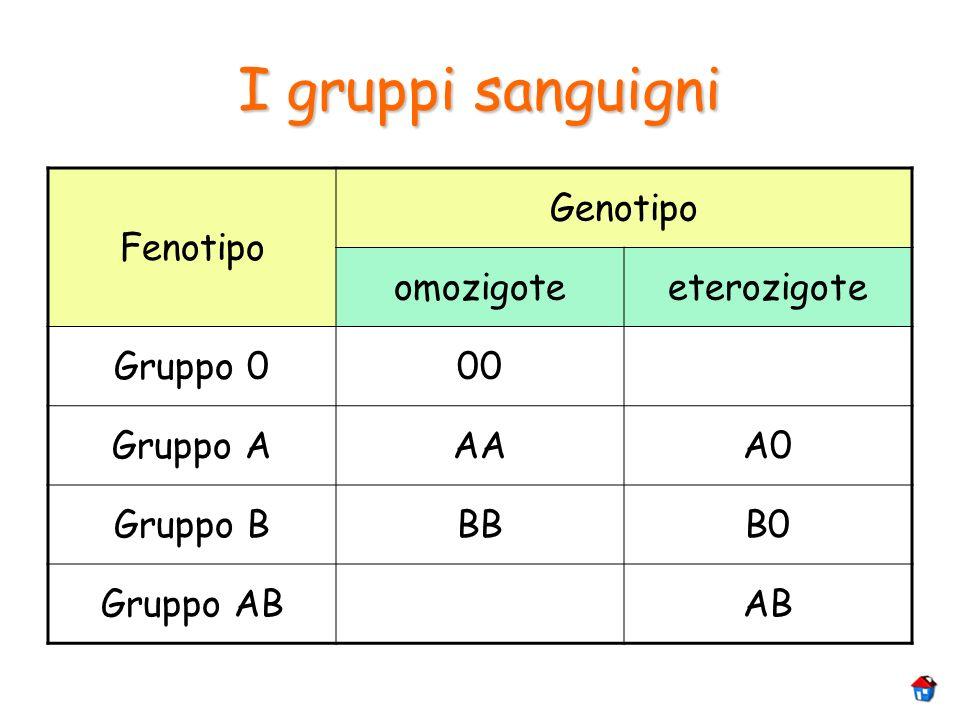 I gruppi sanguigni Fenotipo Genotipo omozigoteeterozigote Gruppo 000 Gruppo AAAA0 Gruppo BBBB0 Gruppo ABAB