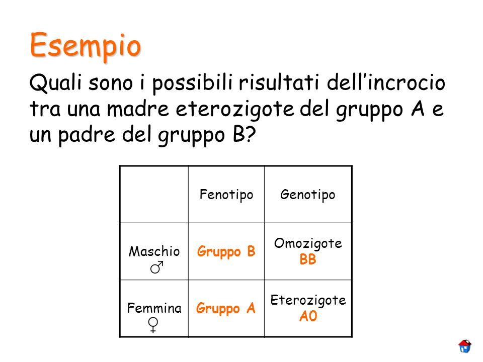 Esempio Quali sono i possibili risultati dellincrocio tra una madre eterozigote del gruppo A e un padre del gruppo B? FenotipoGenotipo MaschioGruppo B
