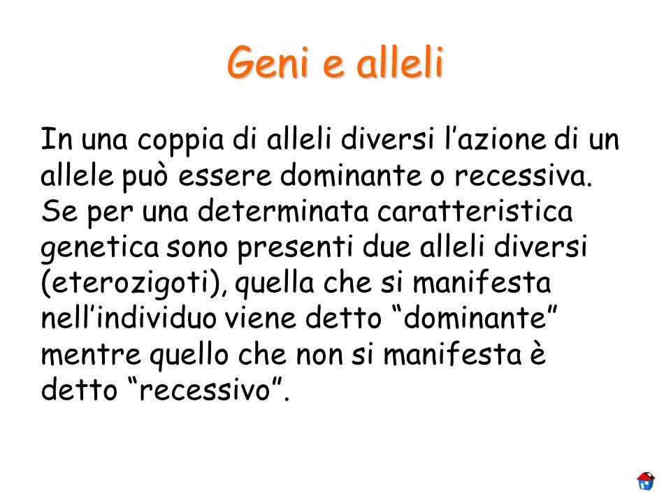 Geni e alleli In una coppia di alleli diversi lazione di un allele può essere dominante o recessiva. Se per una determinata caratteristica genetica so
