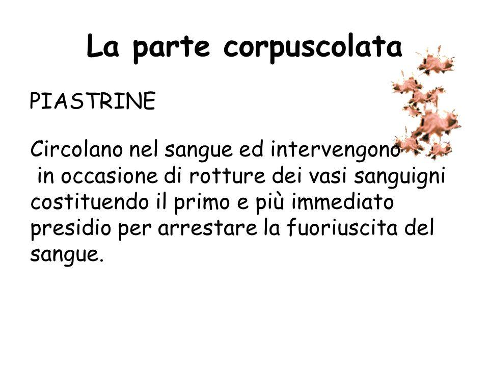 La parte corpuscolata PIASTRINE Le piastrine si formano nel midollo osseo e derivano dalla frammentazione di un particolare tipo di cellule di grandi