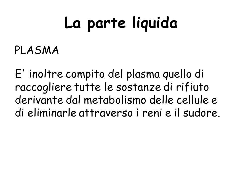 La parte liquida PLASMA Le funzioni del plasma sono numerose: la principale è quella di mantenere costante il volume del sangue circolante, di cedere