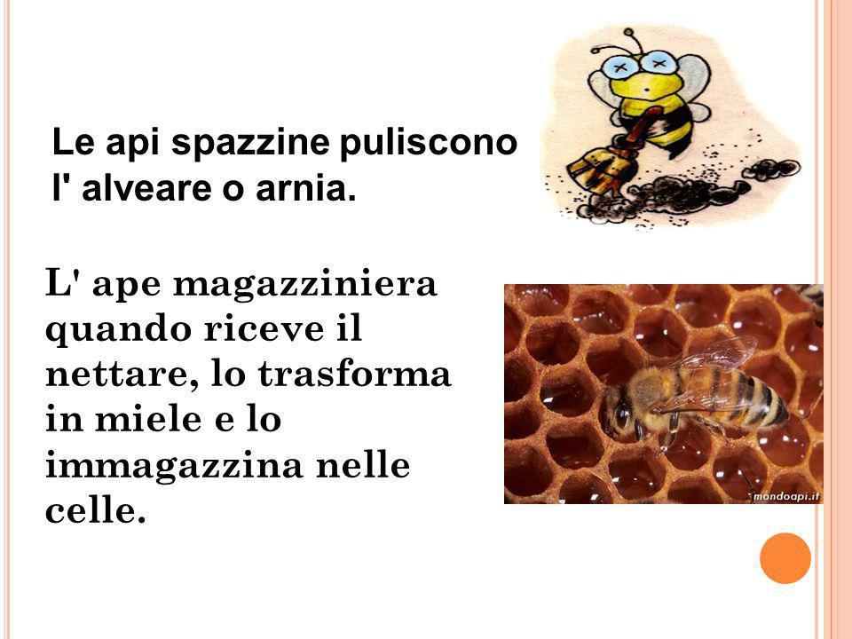 Le api operaie hanno il compitoapi operaie di prendere il nettare e il polline dai fiori. Le api nutrici nutrono le larve con pappa reale, nettare e m