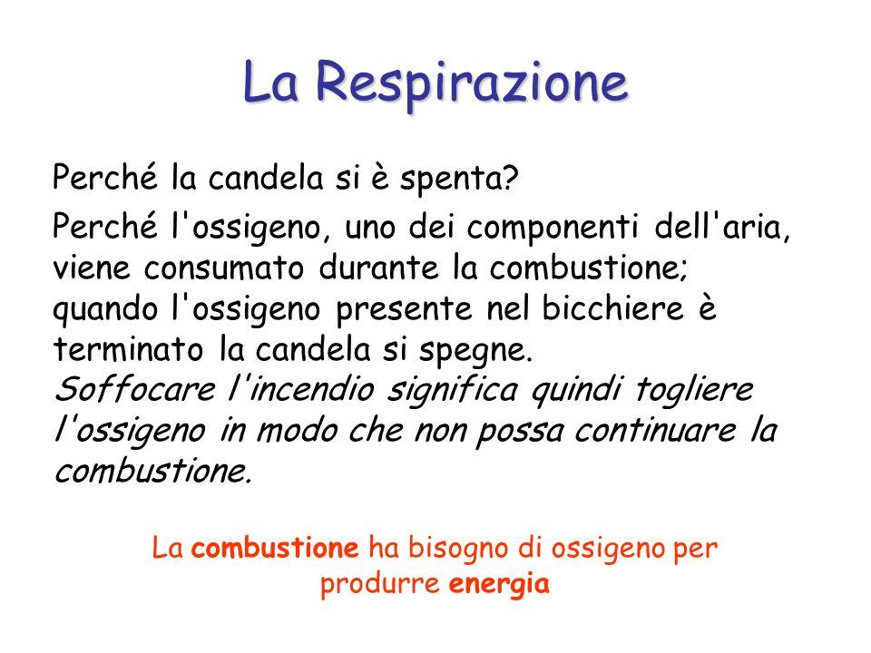 La Respirazione Le sostanze nutritive per fornirci l energia che contengono, devono essere bruciate attraverso un processo di combustione che avviene all interno di ogni cellula e si chiama respirazione cellulare.
