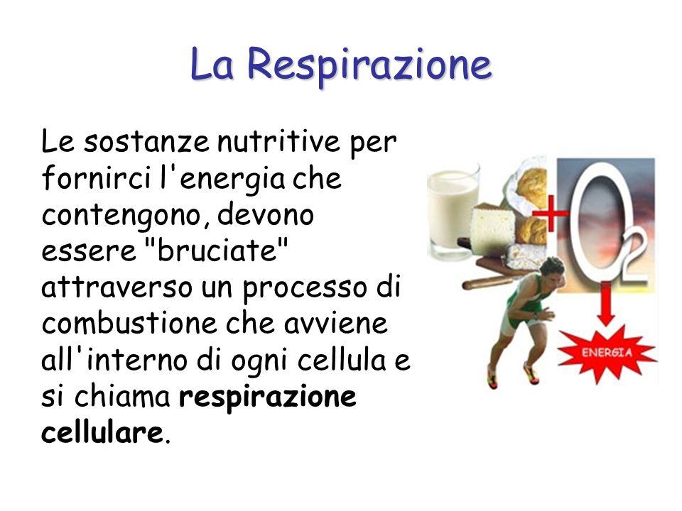 Le Vie Respiratorie 3.