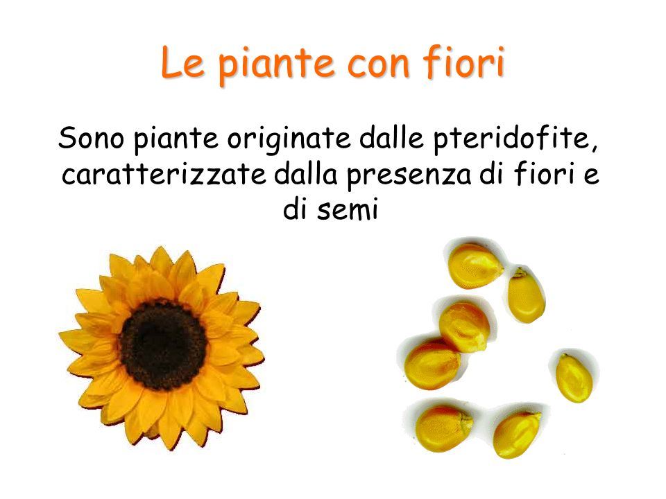Le piante con fiori Sono piante originate dalle pteridofite, caratterizzate dalla presenza di fiori e di semi