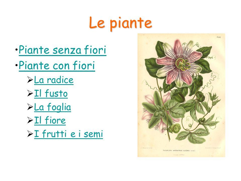 Le piante con fiori Sono le piante a noi più comuni: pini, ciliegi, aranci ma anche le erbe dei prati e delle siepi.