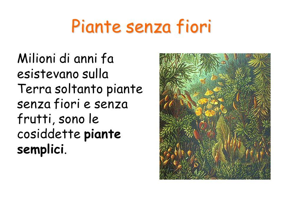 Le briofite Briofite MuschiEpatiche
