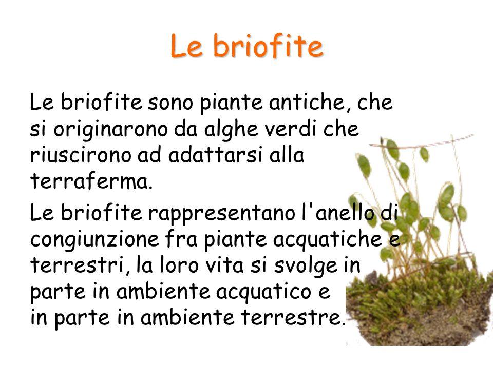 Le briofite Le briofite sono piante antiche, che si originarono da alghe verdi che riuscirono ad adattarsi alla terraferma. Le briofite rappresentano