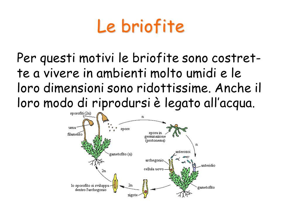 Le briofite Per questi motivi le briofite sono costret- te a vivere in ambienti molto umidi e le loro dimensioni sono ridottissime. Anche il loro modo