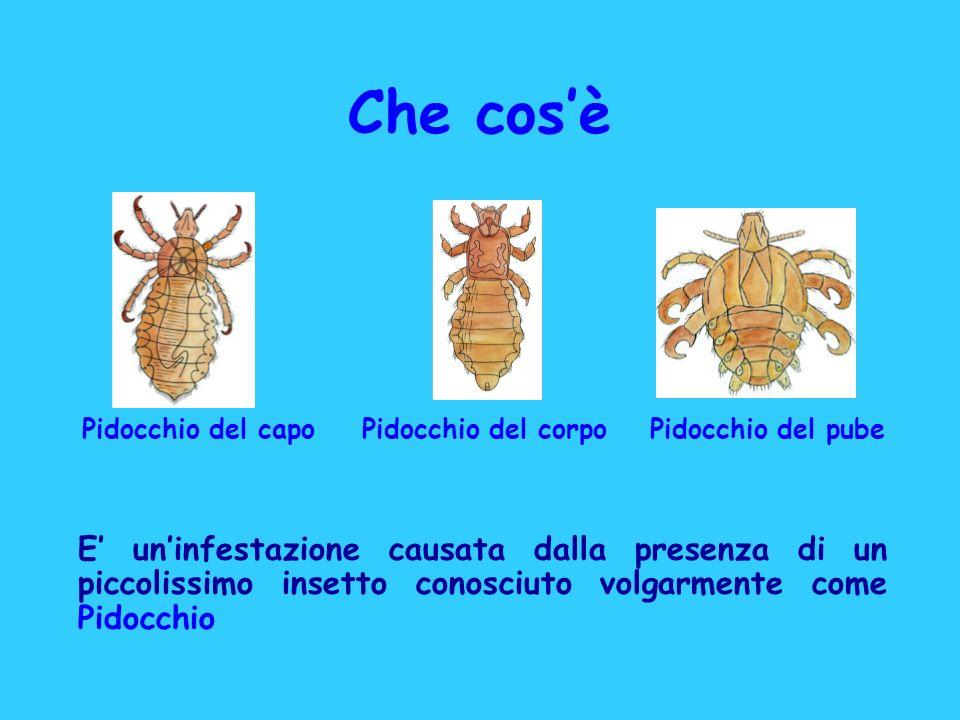 Che cosè E uninfestazione causata dalla presenza di un piccolissimo insetto conosciuto volgarmente come Pidocchio Pidocchio del capoPidocchio del corp