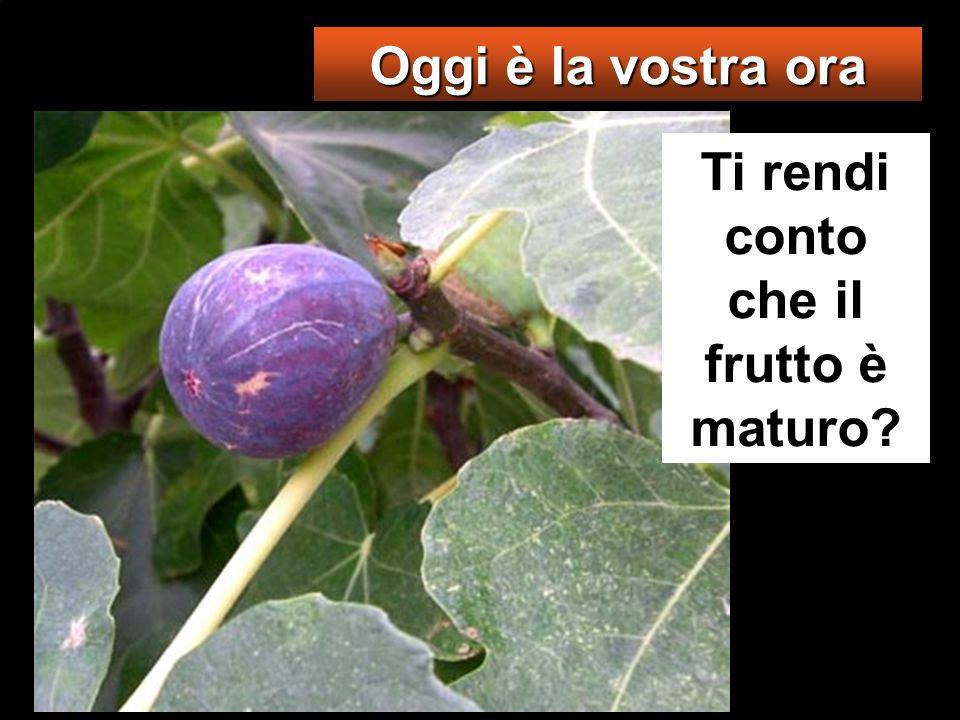Dalla pianta di fico imparate la parabola: quando ormai il suo ramo diventa tenero e spuntano le foglie, sapete che lestate è vicina.