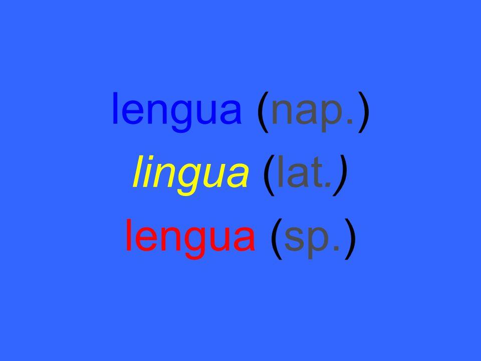 lengua (nap.) lingua (lat.) lengua (sp.)