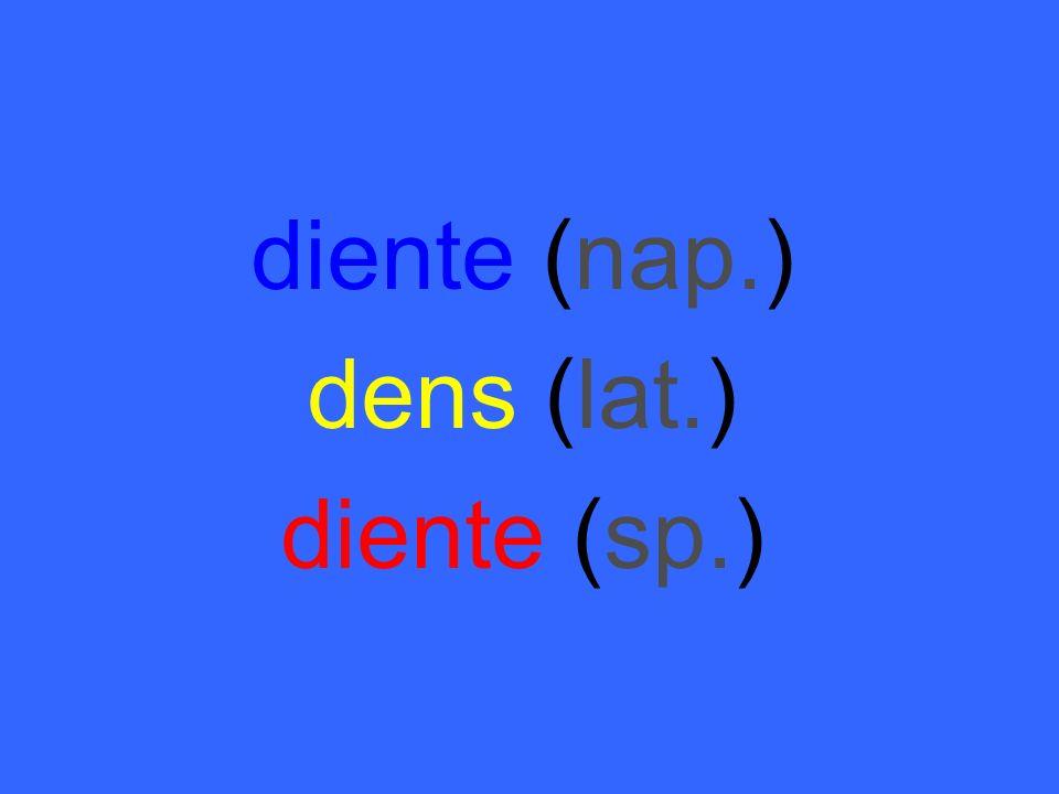 diente (nap.) dens (lat.) diente (sp.)