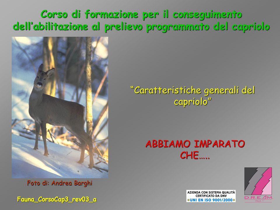 1.LA STRUTTURA CORPOREA DEL CAPRIOLO VIENE INTERPRETATA COME…..
