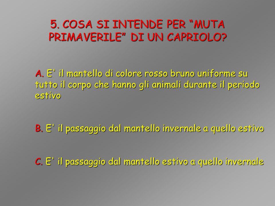 16.E POSSIBILE OSSERVARE UN CAPRIOLO MASCHIO CON TROFEO IN VELLUTO NEI MESI DI MAGGIO-GIUGNO.