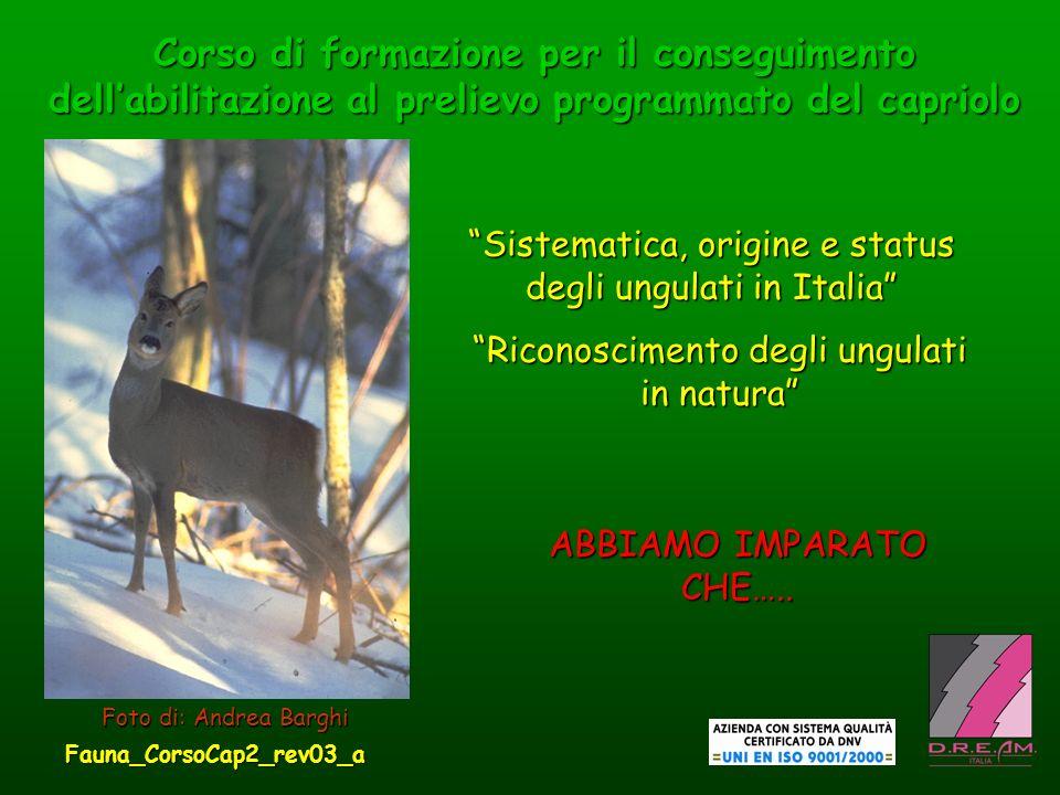 Corso di formazione per il conseguimento dellabilitazione al prelievo programmato del capriolo Sistematica, origine e status degli ungulati in Italia