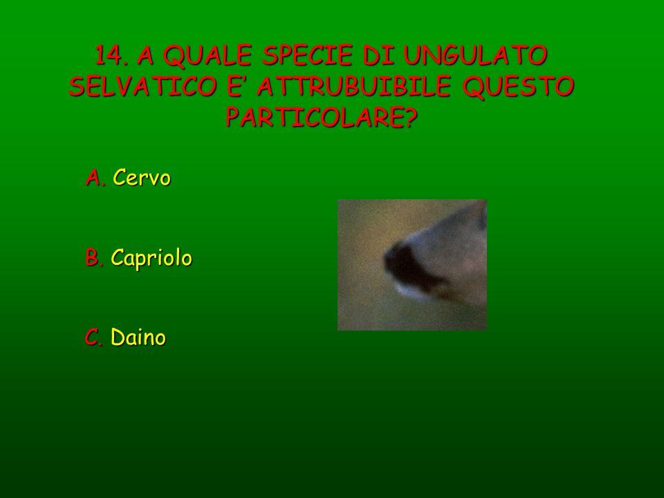 14. A QUALE SPECIE DI UNGULATO SELVATICO E ATTRUBUIBILE QUESTO PARTICOLARE? A. Cervo B. Capriolo C. Daino
