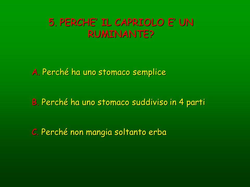 5. PERCHE IL CAPRIOLO E UN RUMINANTE? A. Perché ha uno stomaco semplice B. Perché ha uno stomaco suddiviso in 4 parti C. Perché non mangia soltanto er