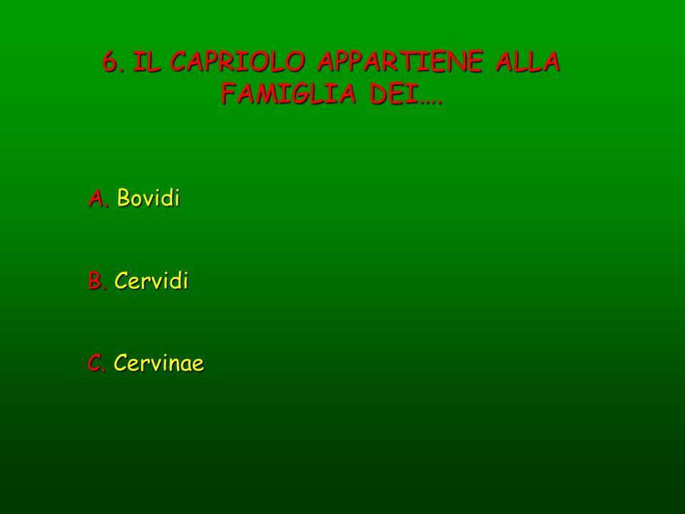 6. IL CAPRIOLO APPARTIENE ALLA FAMIGLIA DEI…. A. Bovidi B. Cervidi C. Cervinae