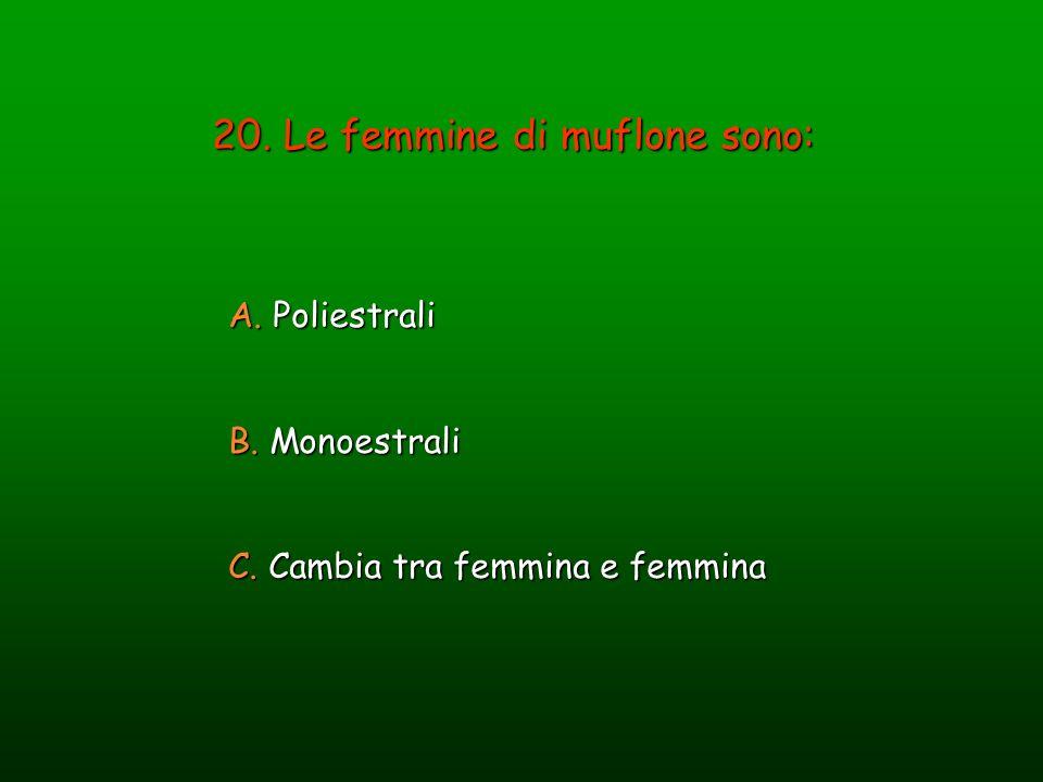 20. Le femmine di muflone sono: A. Poliestrali B. Monoestrali C. Cambia tra femmina e femmina