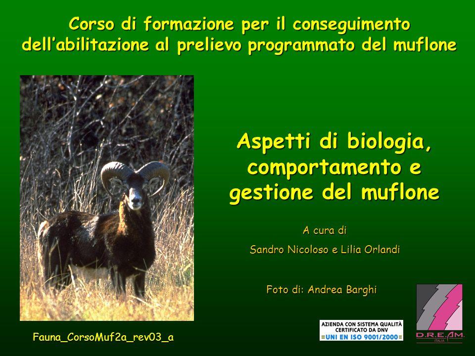 BIOLOGIA E COMPORTAMENTO muflone Comportamento gregario Specie poligama,difesa individuale delle femmine recettive; non cè difesa di harem