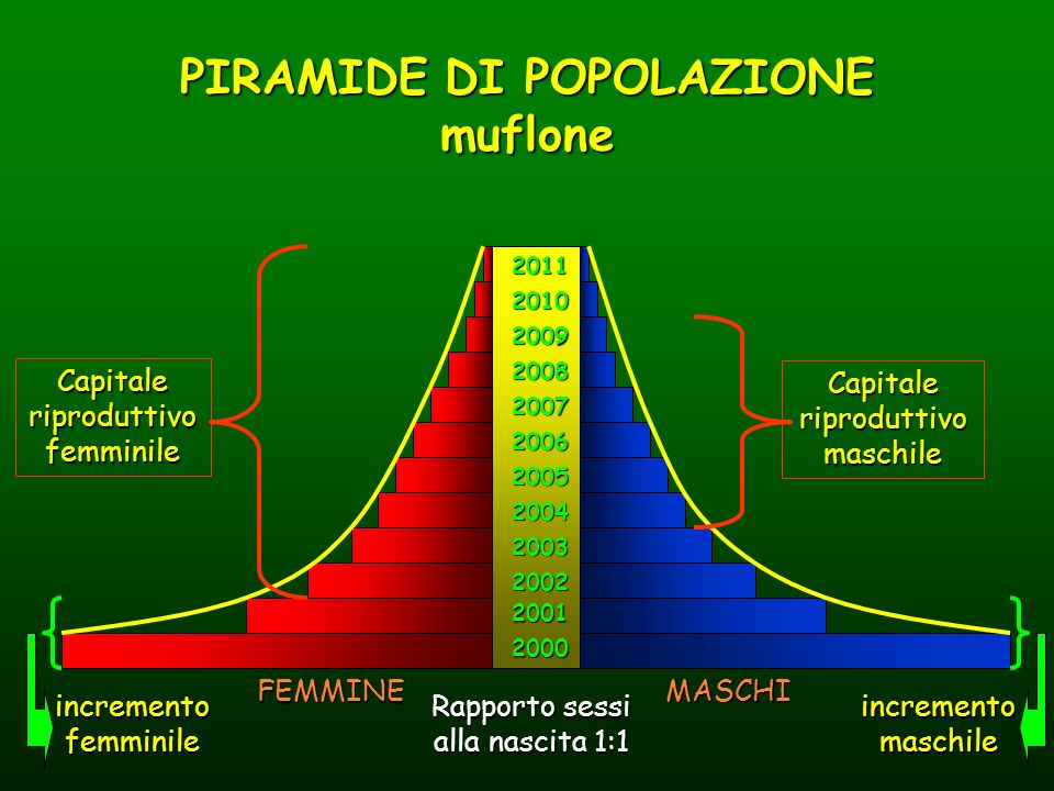 PROPORZIONE SESSI La PS alla nascita è circa 1:1; nel totale della popolazione adulta si tende ad avere circa 1,5-3 femmine per ogni maschio cioè prevalgono le femmine per una maggiore mortalità maschile PROPORZIONE CLASSI DI ETA Sul 100% dei maschi: Maschi giovani (1-2 anni) 35-45% Maschi adulti (3-8 anni) 40-60% Maschi anziani (9 anni e più) 5-15% Sul 100% delle femmine: Femmine giovani (1 anno) 20-30% Femmine adulte (2-11 anni) 55-75% Femmine anziane (oltre 11 anni) 5-15% Esempio di suddivisione in classi di età prima dei parti