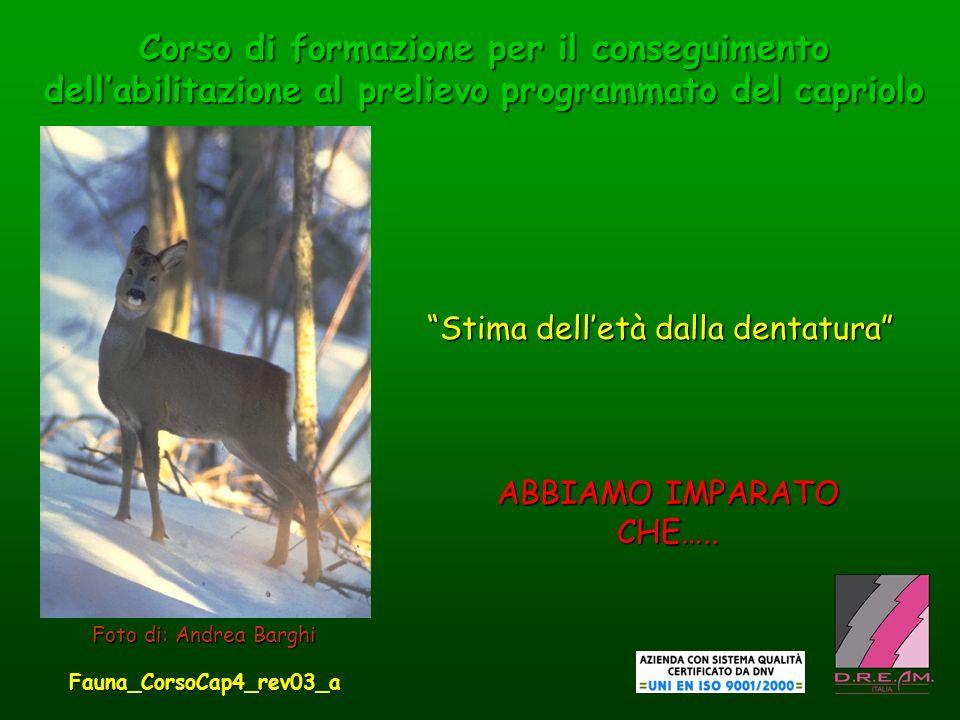 Corso di formazione per il conseguimento dellabilitazione al prelievo programmato del capriolo Stima delletà dalla dentatura Foto di: Andrea Barghi AB