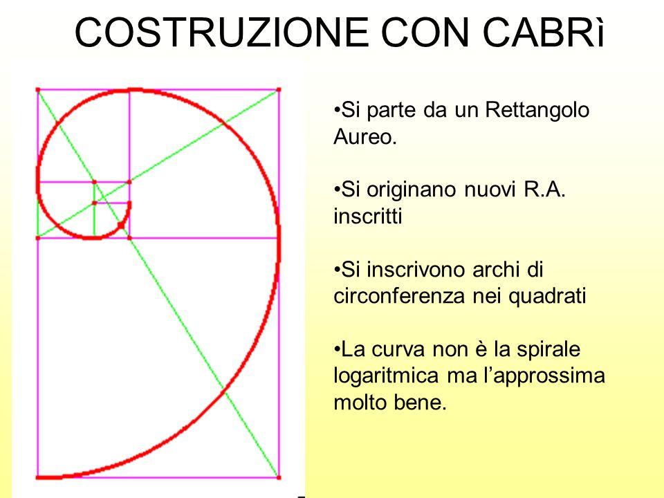 Si parte da un Rettangolo Aureo. Si originano nuovi R.A. inscritti Si inscrivono archi di circonferenza nei quadrati La curva non è la spirale logarit