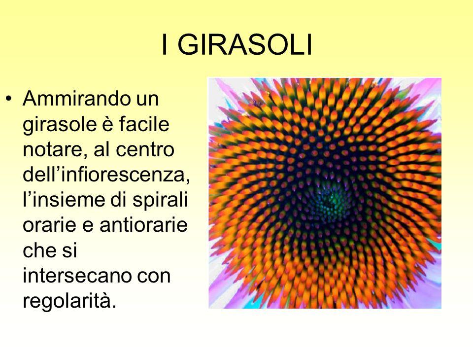 I GIRASOLI Ammirando un girasole è facile notare, al centro dellinfiorescenza, linsieme di spirali orarie e antiorarie che si intersecano con regolari