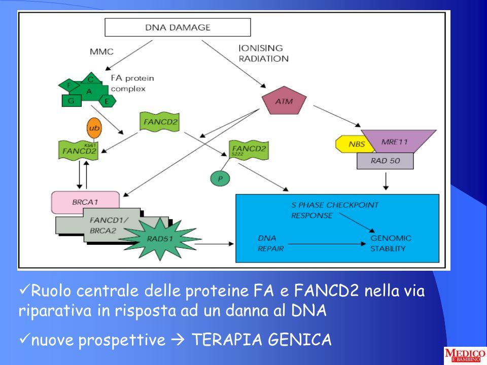 Ruolo centrale delle proteine FA e FANCD2 nella via riparativa in risposta ad un danna al DNA nuove prospettive TERAPIA GENICA