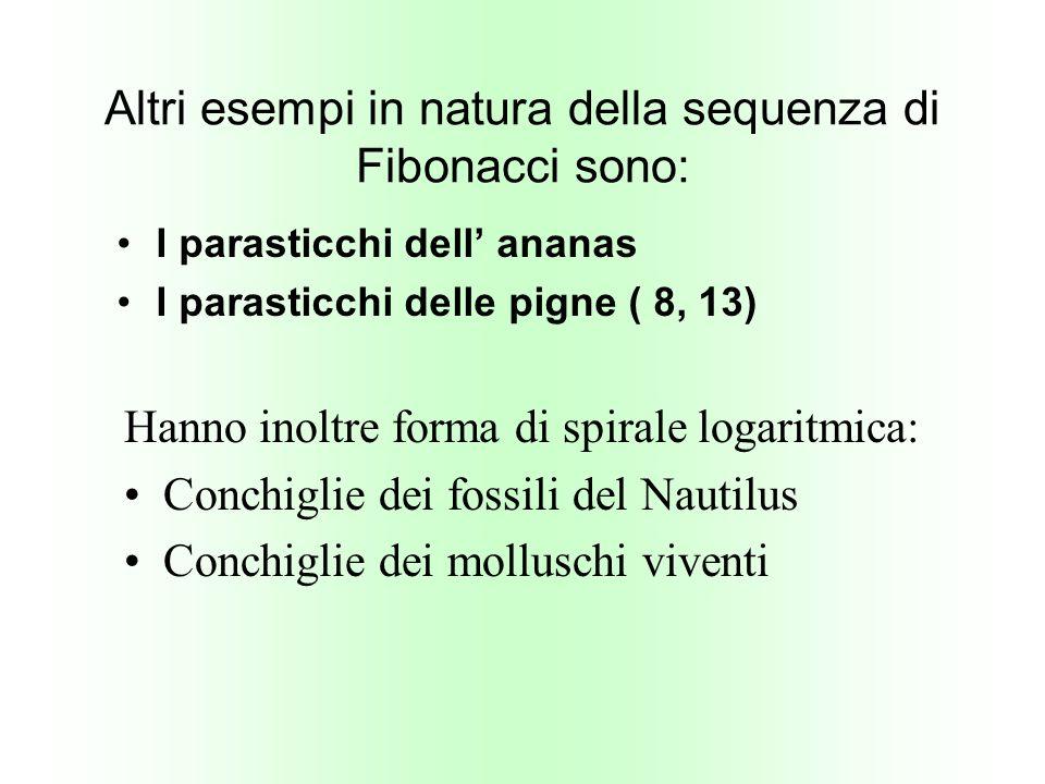 Altri esempi in natura della sequenza di Fibonacci sono: I parasticchi dell ananas I parasticchi delle pigne ( 8, 13) Hanno inoltre forma di spirale l