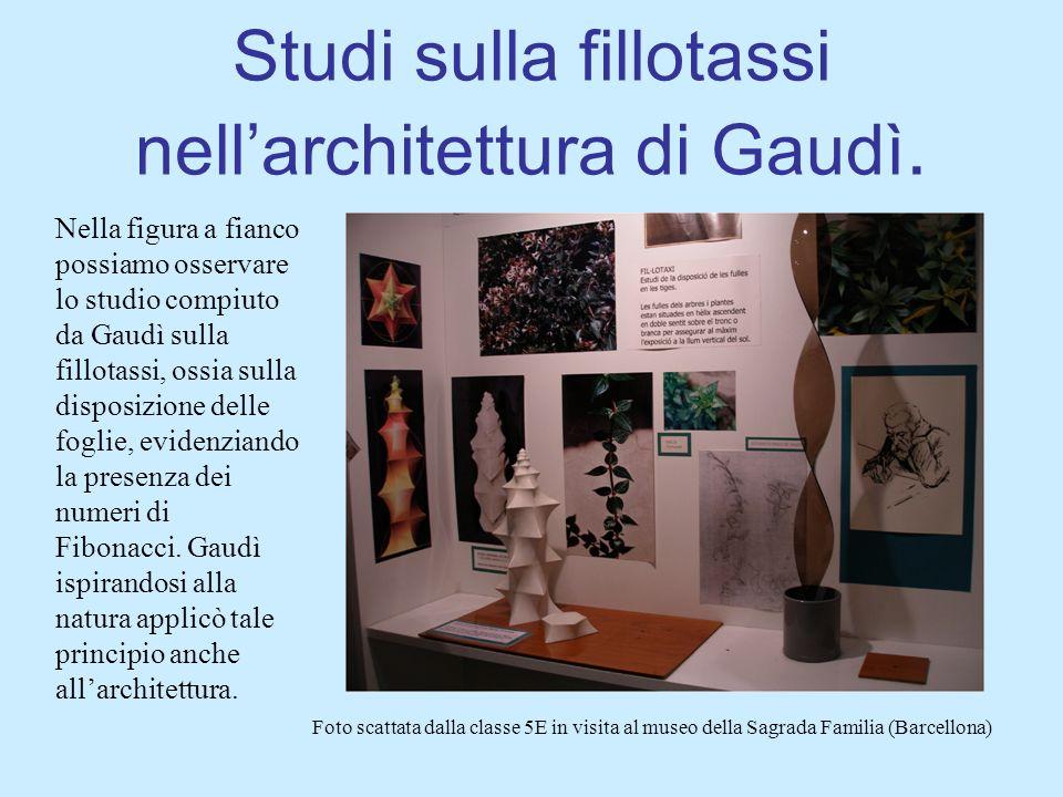 Studi sulla fillotassi nellarchitettura di Gaudì. Nella figura a fianco possiamo osservare lo studio compiuto da Gaudì sulla fillotassi, ossia sulla d