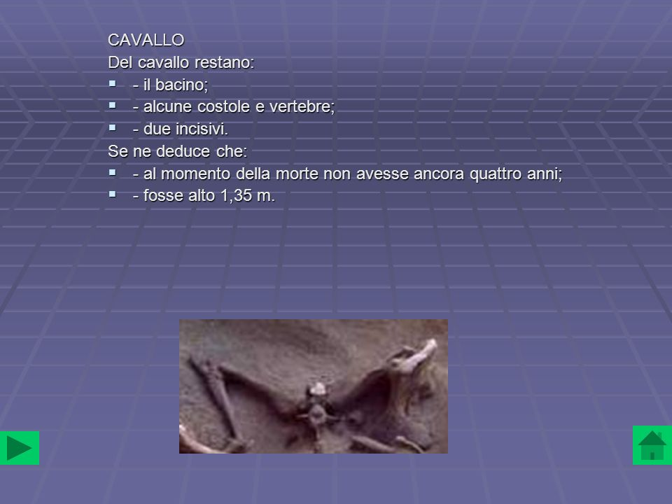 CAVALLO Del cavallo restano: - il bacino; - il bacino; - alcune costole e vertebre; - alcune costole e vertebre; - due incisivi. - due incisivi. Se ne