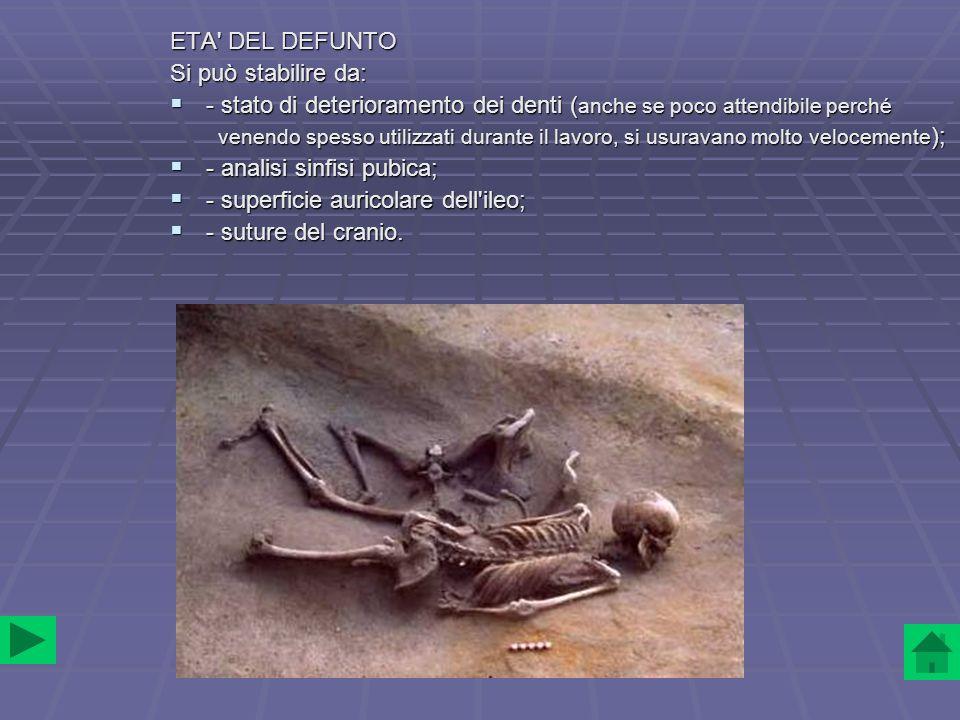 STILE DI VITA E STATO DI SALUTE Lo scheletro presenta: - artrosi delle vertebre lombari; - artrosi delle vertebre lombari; - artrosi tra omero e ulna; - artrosi tra omero e ulna; - femori arcuati (cavalcava spesso); - femori arcuati (cavalcava spesso); - denti usurati e due molari persi.