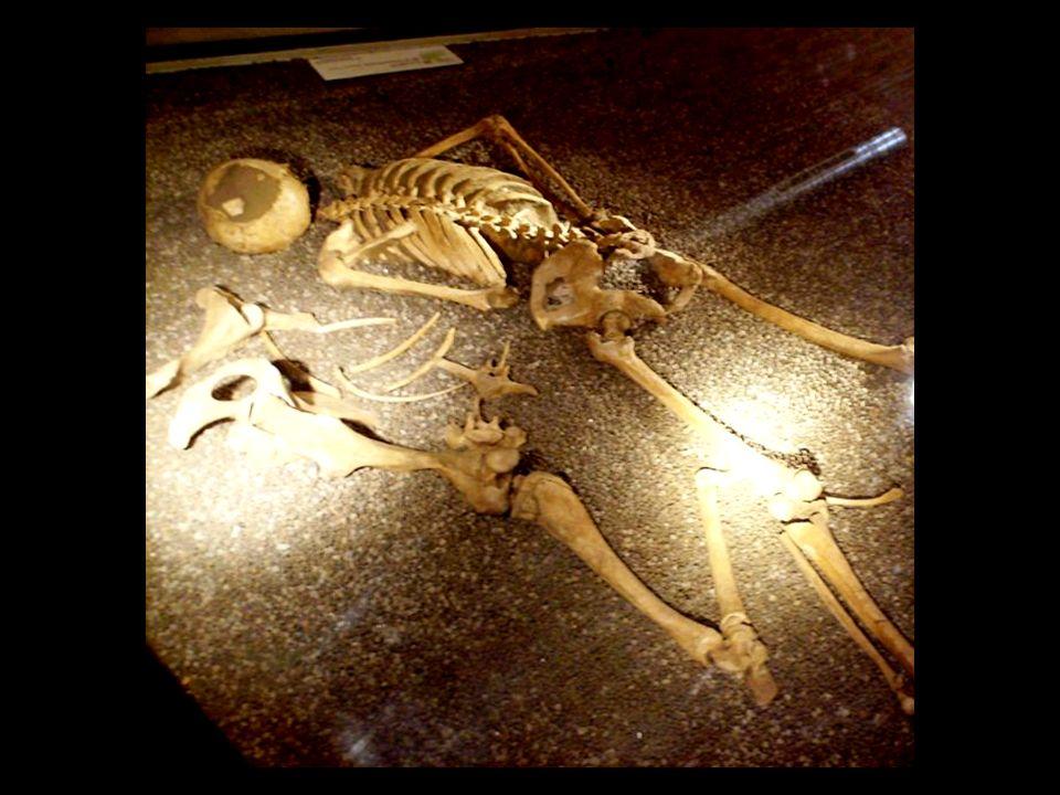 Urna di bambina con uovo di cigno Si tratta dell urna cineraria di una bambina di circa cinque anni che, oltre i soliti oggetti di corredo funerario come alcuni braccialetti, delle conchiglie ed un astragalo (un osso di animale considerato portafortuna) presenta anche un uovo di cigno.