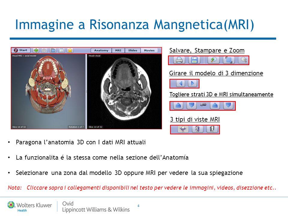 4 Paragona lanatomia 3D con I dati MRI attuali La funzionalita é la stessa come nella sezione dellAnatomía Selezionare una zona dal modello 3D oppure MRI per vedere la sua spiegazione Nota: Cliccare sopra i collegamenti disponibili nel testo per vedere le immagini, videos, disezzione etc..