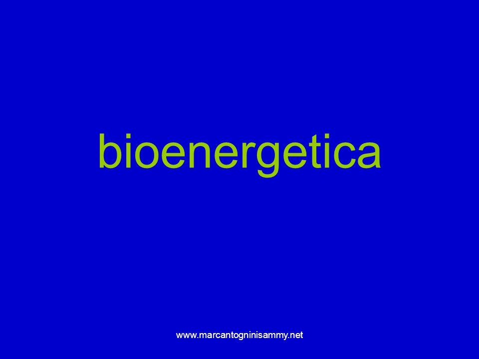 www.marcantogninisammy.net bioenergetica