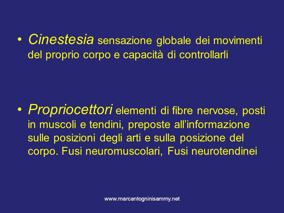 www.marcantogninisammy.net Cinestesia sensazione globale dei movimenti del proprio corpo e capacità di controllarli Propriocettori elementi di fibre n