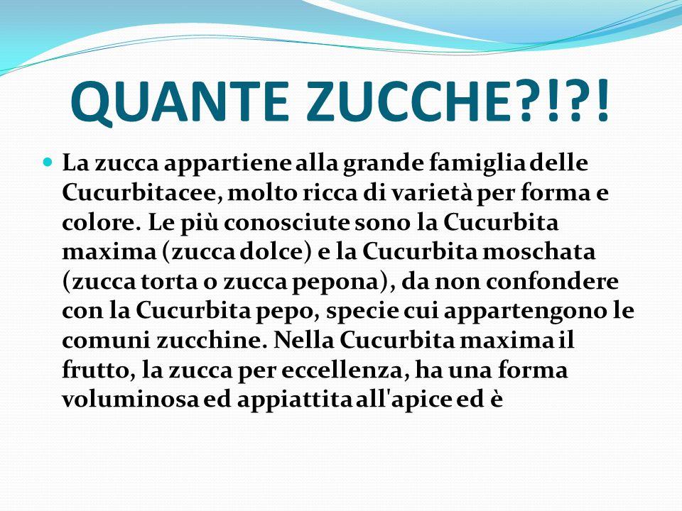 QUANTE ZUCCHE?!?! La zucca appartiene alla grande famiglia delle Cucurbitacee, molto ricca di varietà per forma e colore. Le più conosciute sono la Cu