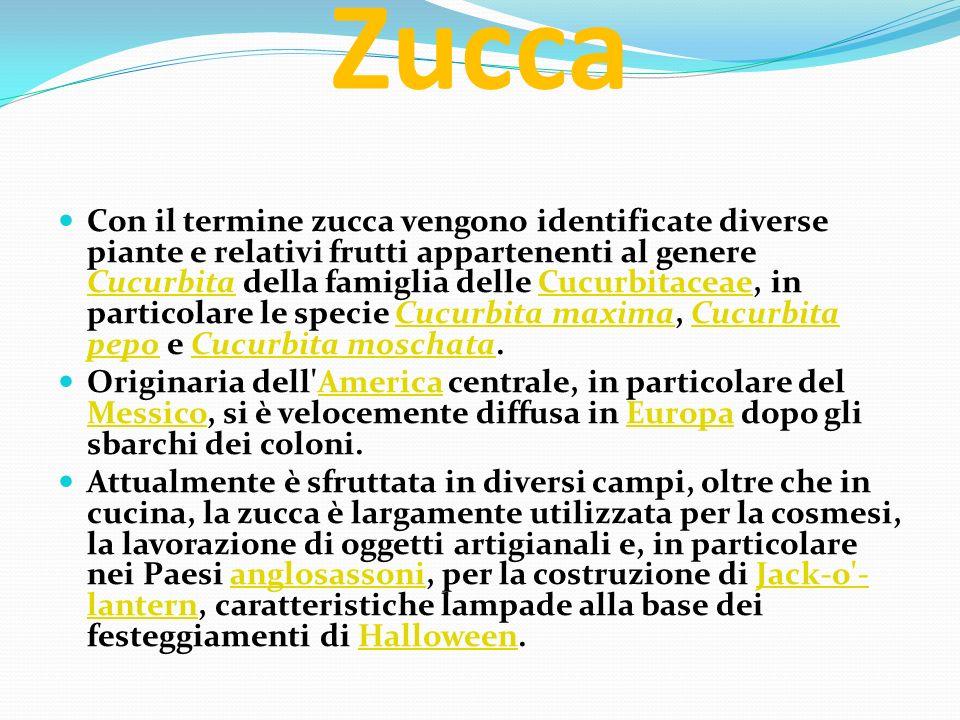 Zucca Con il termine zucca vengono identificate diverse piante e relativi frutti appartenenti al genere Cucurbita della famiglia delle Cucurbitaceae,