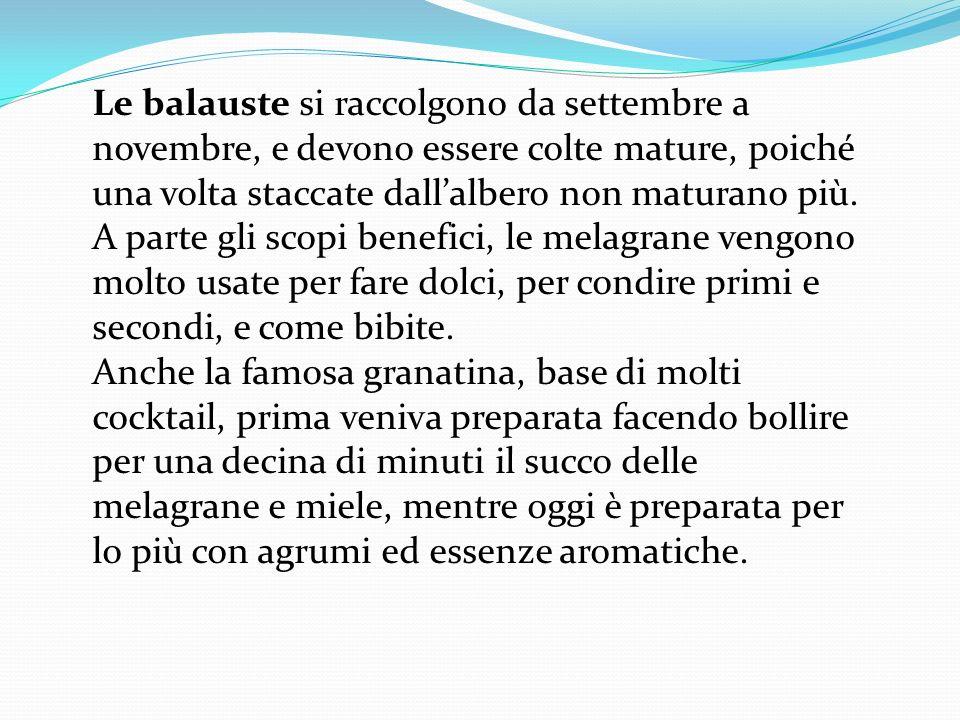 Le balauste si raccolgono da settembre a novembre, e devono essere colte mature, poiché una volta staccate dallalbero non maturano più. A parte gli sc