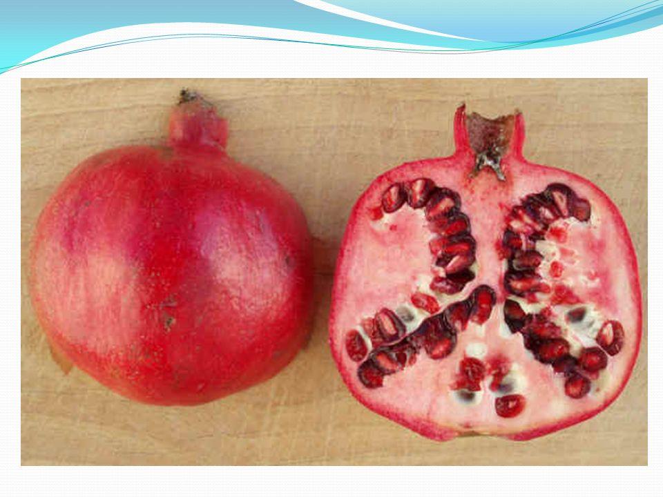 Le balauste si raccolgono da settembre a novembre, e devono essere colte mature, poiché una volta staccate dallalbero non maturano più.