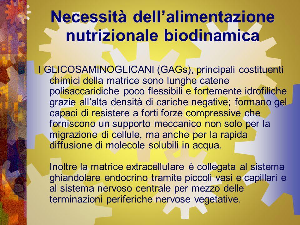 Necessità dellalimentazione nutrizionale biodinamica I GLICOSAMINOGLICANI (GAGs), principali costituenti chimici della matrice sono lunghe catene poli