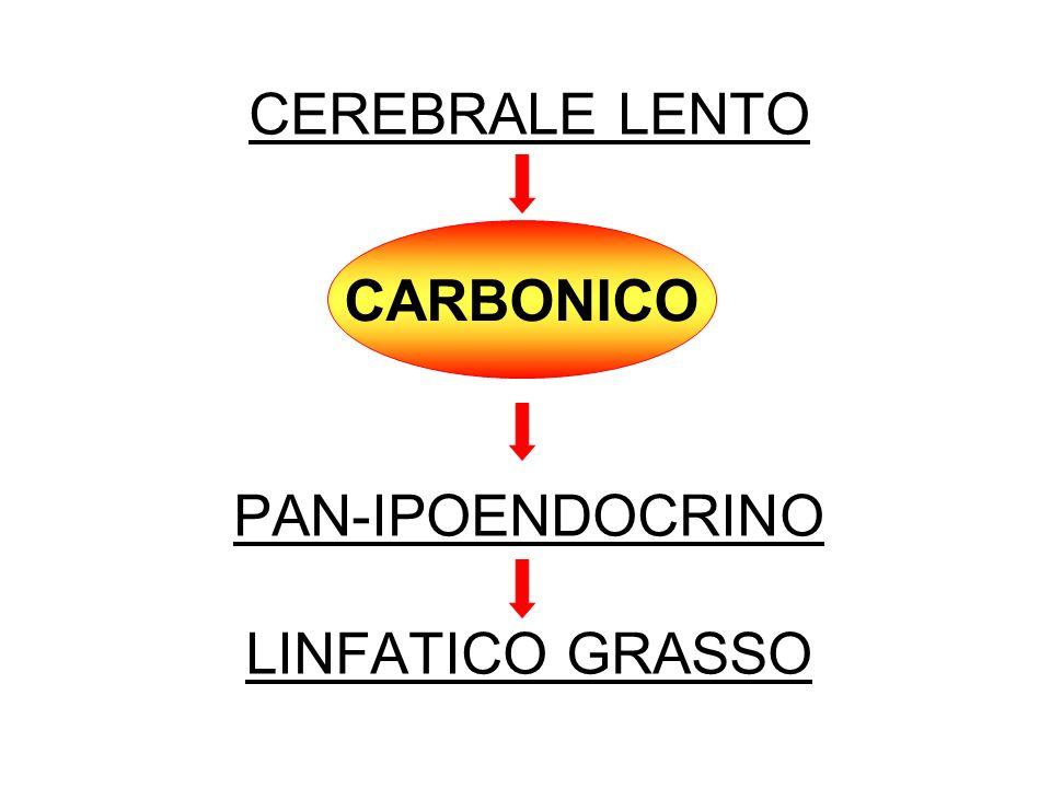 CEREBRALE LENTO PAN-IPOENDOCRINO LINFATICO GRASSO CARBONICO