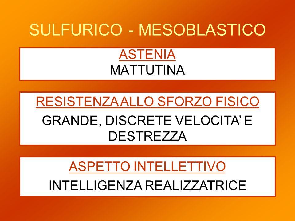 SULFURICO - MESOBLASTICO ASTENIA MATTUTINA RESISTENZA ALLO SFORZO FISICO GRANDE, DISCRETE VELOCITA E DESTREZZA ASPETTO INTELLETTIVO INTELLIGENZA REALI