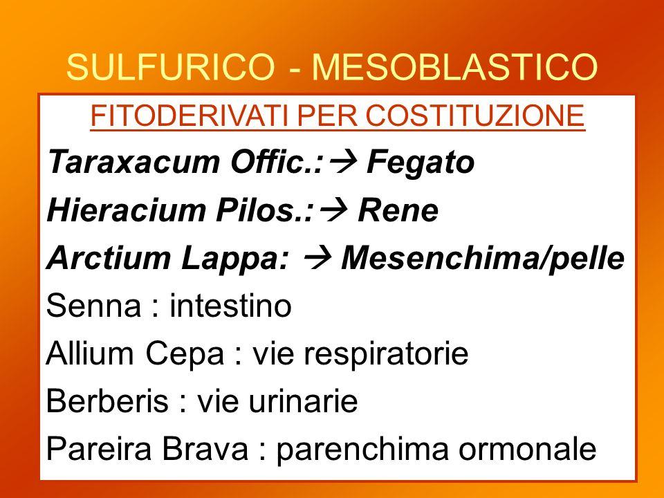 SULFURICO - MESOBLASTICO FITODERIVATI PER COSTITUZIONE Taraxacum Offic.: Fegato Hieracium Pilos.: Rene Arctium Lappa: Mesenchima/pelle Senna : intesti
