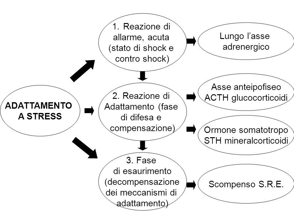 ADATTAMENTO A STRESS 1.Reazione di allarme, acuta (stato di shock e contro shock) 2. Reazione di Adattamento (fase di difesa e compensazione) 3. Fase